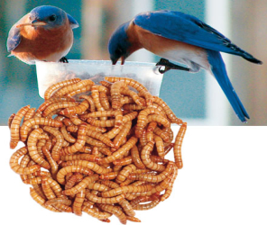 Mealworms, Bait Worms & Live Insects