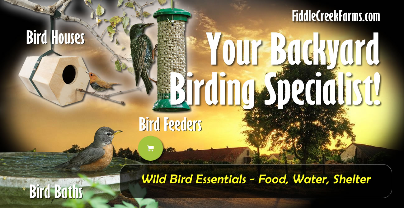 Wild Bird Essentials