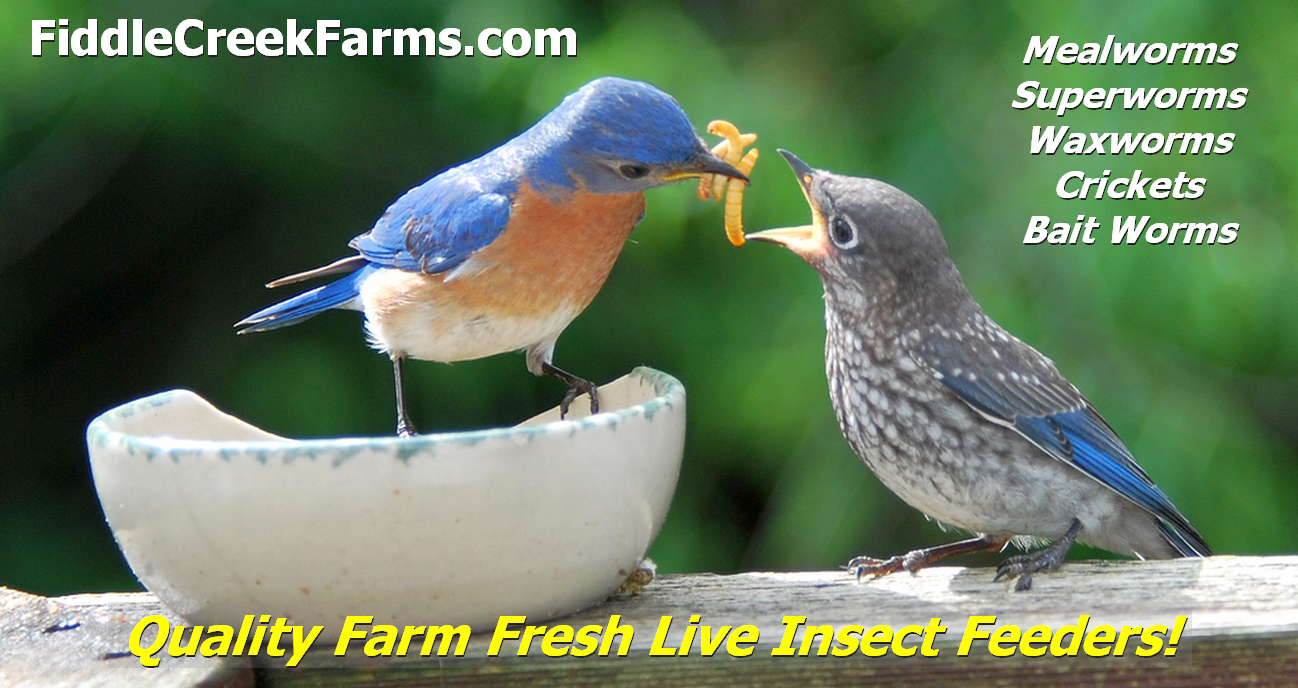 Mealworms, Live Insect Feeders, Bait Worms