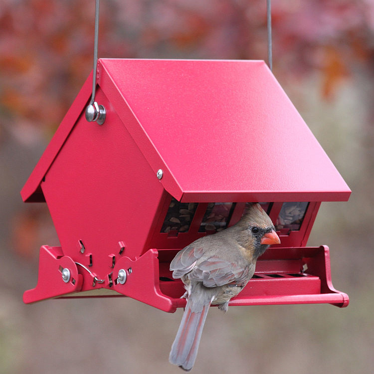 Absolute II Mini Squirrel Proof Bird Feeder