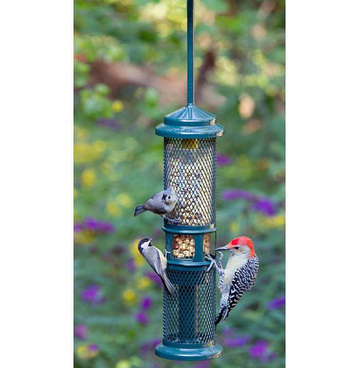 Squirrel Buster Peanut Plus Bird Feeder