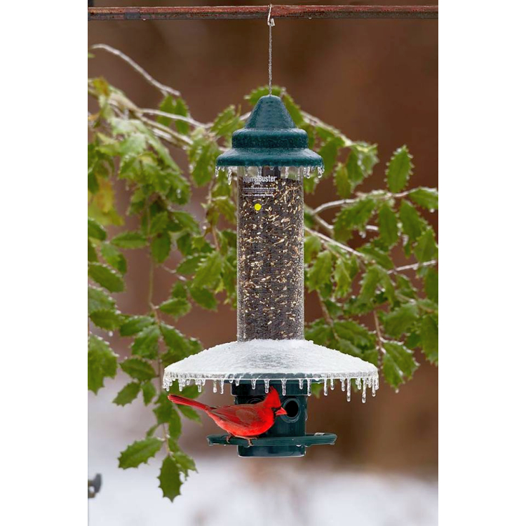 Squirrel Buster Plus Feeder with Weather Guard