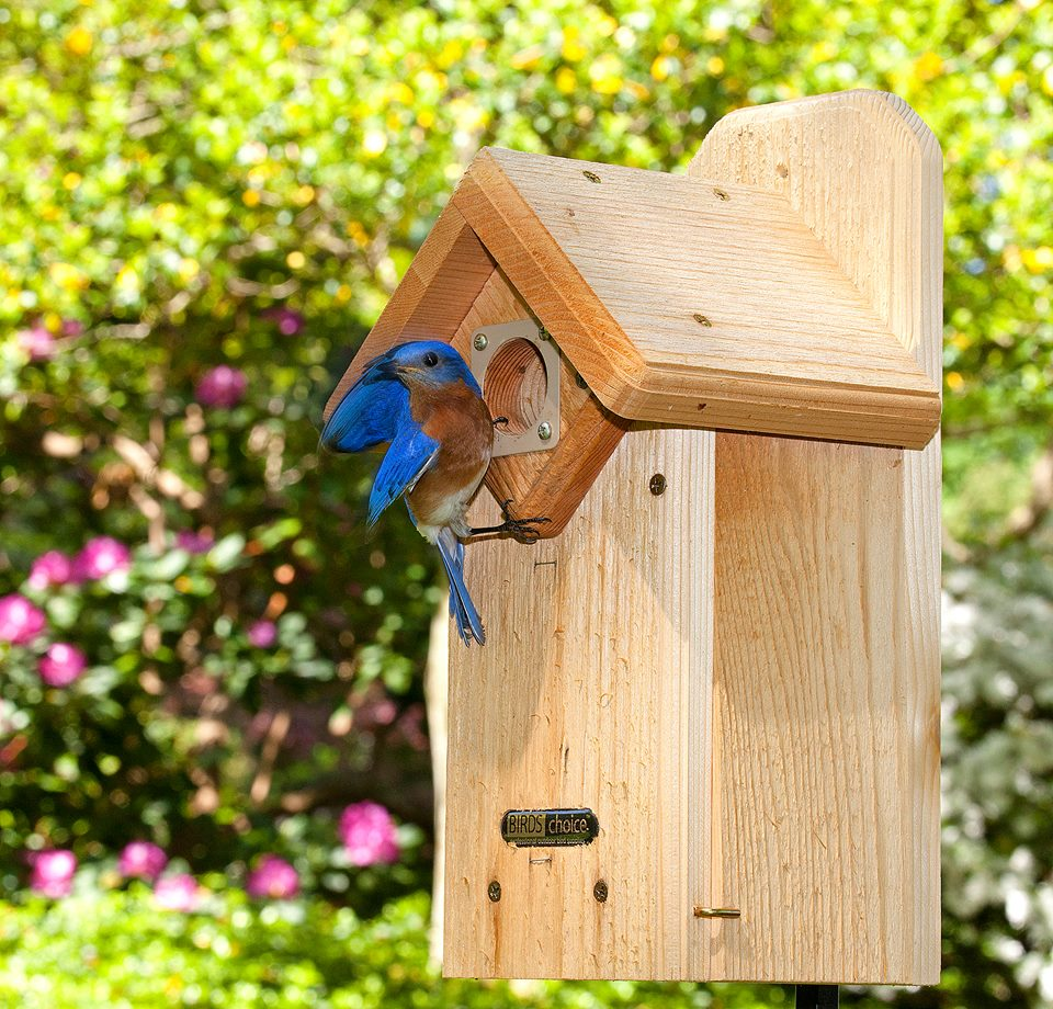 Cedar Eastern Bluebird House w/Viewing Window