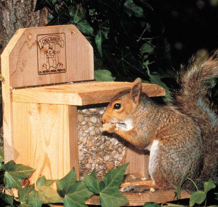 Chuckanut Squirrel Feeder with 1# of Feed