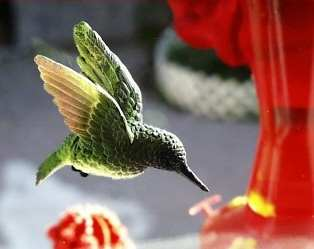 Ruby Throated Hummingbird Fly Through Magnet