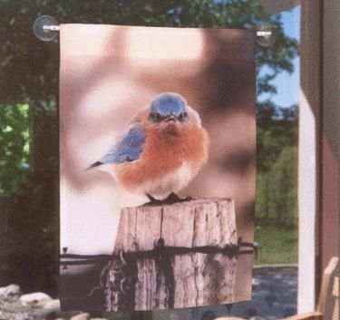 Mad Bluebird Garden Flag