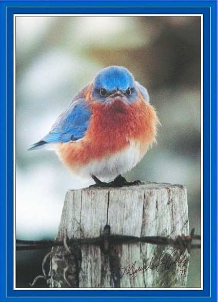 Mad Bluebird 500 Piece Jigsaw Puzzle