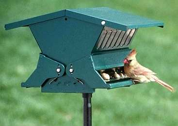 Absolute II Squirrel Proof Bird Feeder Green