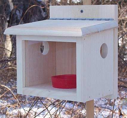 feeders bird more the and coveside feeder bluebird small store
