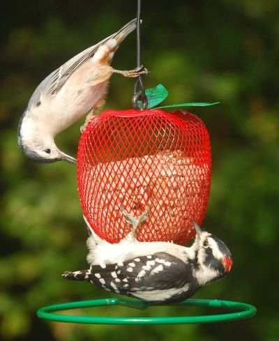 Globe Bird Feeders for Small Songbirds Globe Bird Feeders For