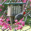Second Nature Recycled Single Cake Tail Prop Suet Feeder