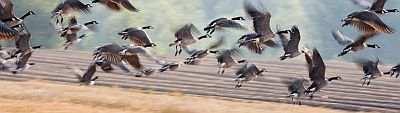 AwayWithGeese Solar-Powered Goose Deterrent
