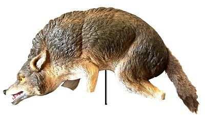 3D Coyote Predator Replica
