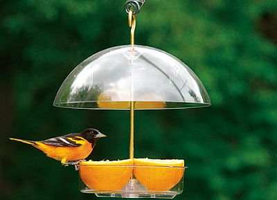 Attract Orioles with fresh fruit in the Droll Yankees Seed Saver Domed Feeder!