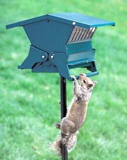 Absolute II Squirrel Proof Bird Feeder - Keeps those pesky squirrels from stealing the seed!