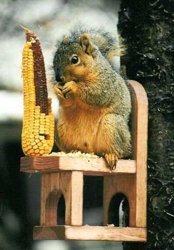 Squirrel Chair Feeder