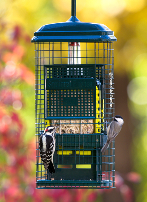 Squirrel Buster Suet Feeder
