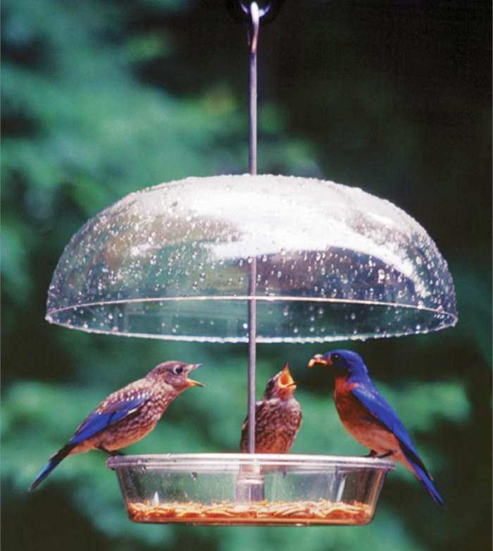 Aspects Vista-Dome Bird Feeder
