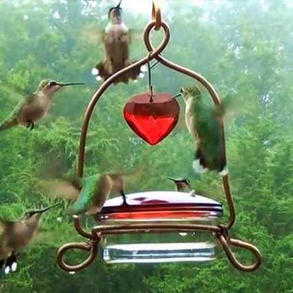 Holland Hill Tweet Heart Hummingbird Feeder