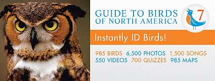Guide to Birds of North America Version 7 USB Flash Drive Windows Edition