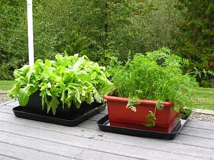 UrBin Grower Raised Bed Growing System