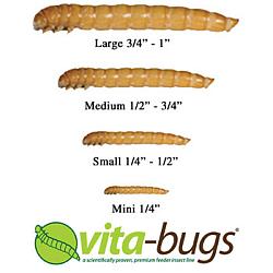 Vita-Bug Mealworm Sizes